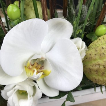 Arrangement d'orchidées, Des Lys & Délices, Fleuriste à Sion