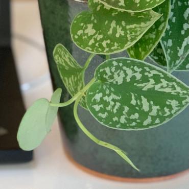 Plante dépolluante dans un pot élégant en céramique émaillée verte. Des Lys & Délices, Sion