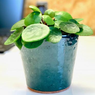 Plante pilea dans un pot élégant en céramique émaillée verte. Des Lys & Délices, Sion